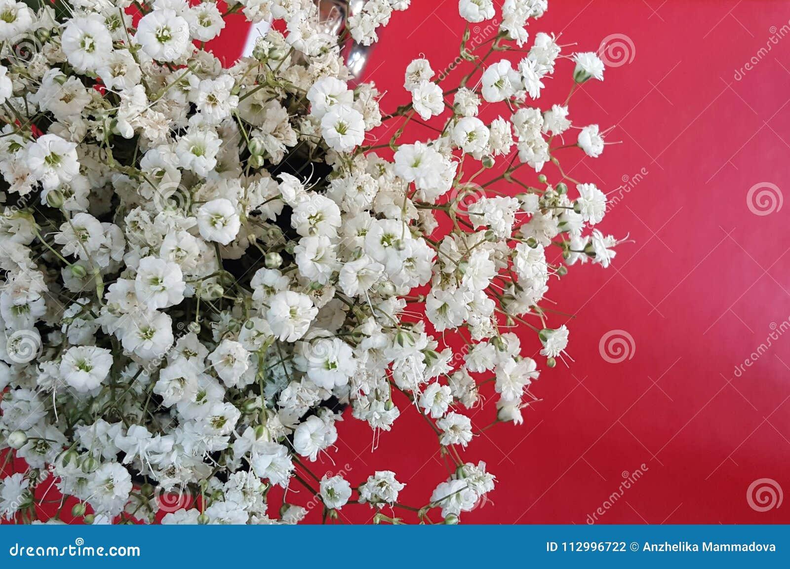 Flores brancas do Gypsophila