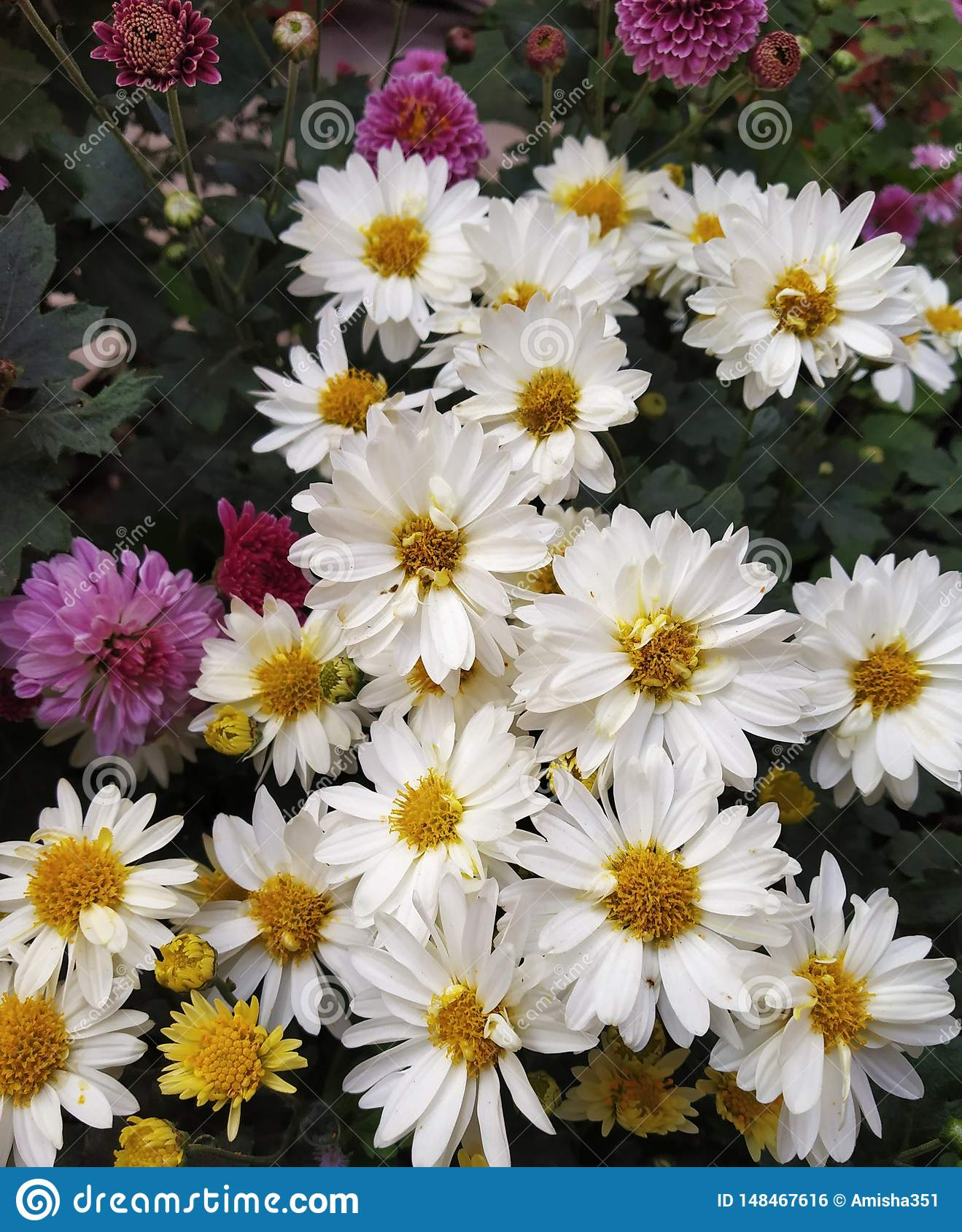 Flores brancas no conjunto