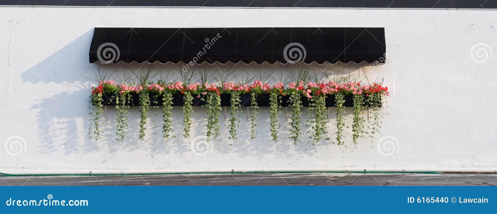 Flores colgantes con el toldo
