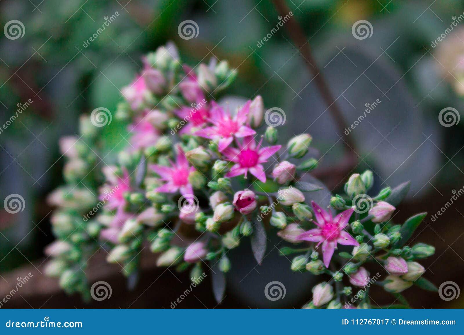 Flores color de rosa minúsculas en verde