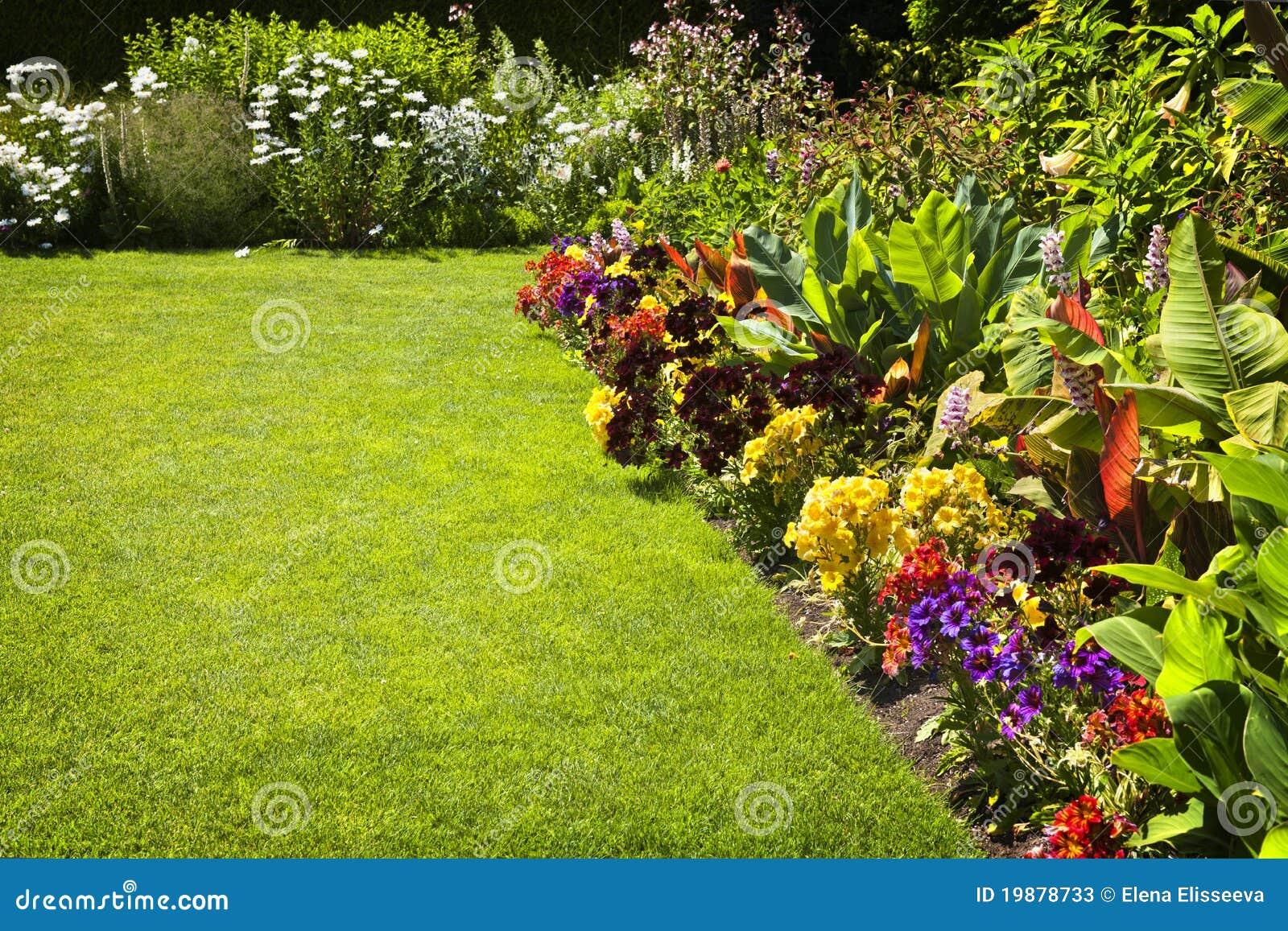 Flores coloridas do jardim