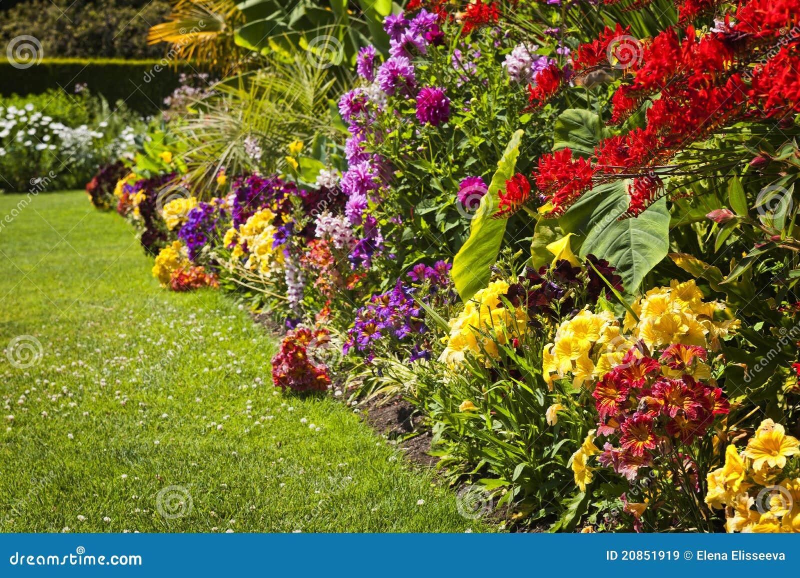 flores coloridas jardim:Jardim de flor colorido brilhante bonito com várias flores.