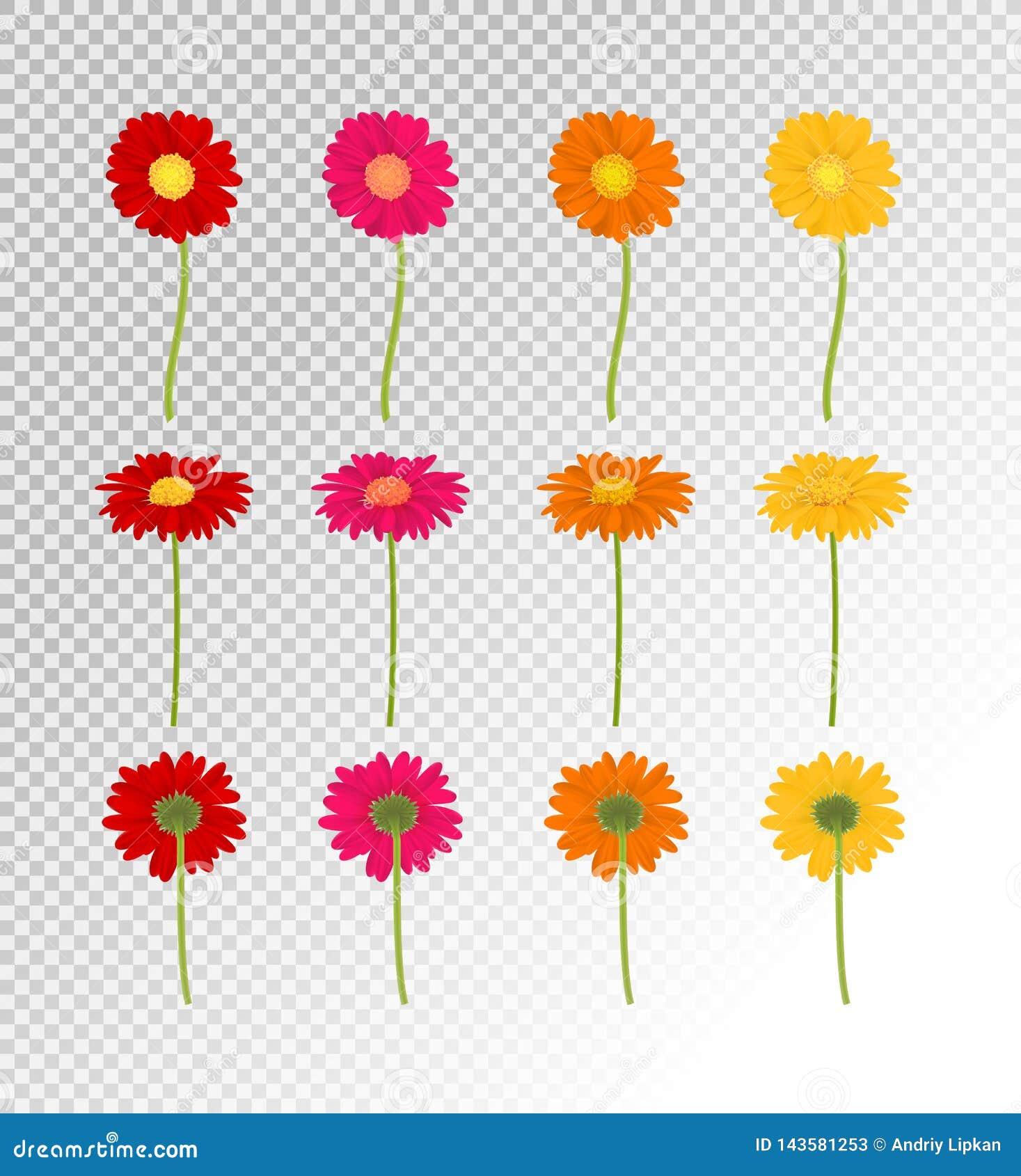 Flores coloridas grandes sistema, ejemplo de Gerbers del vector