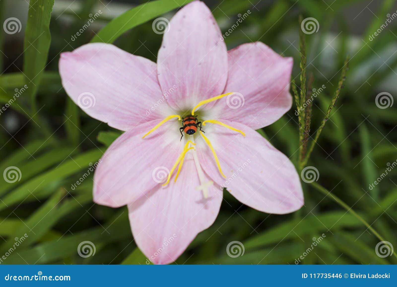 Flores Coloridas Muy Bonitas De La Primavera En Mi Jardin Foto De - Flores-bonitas-para-jardin