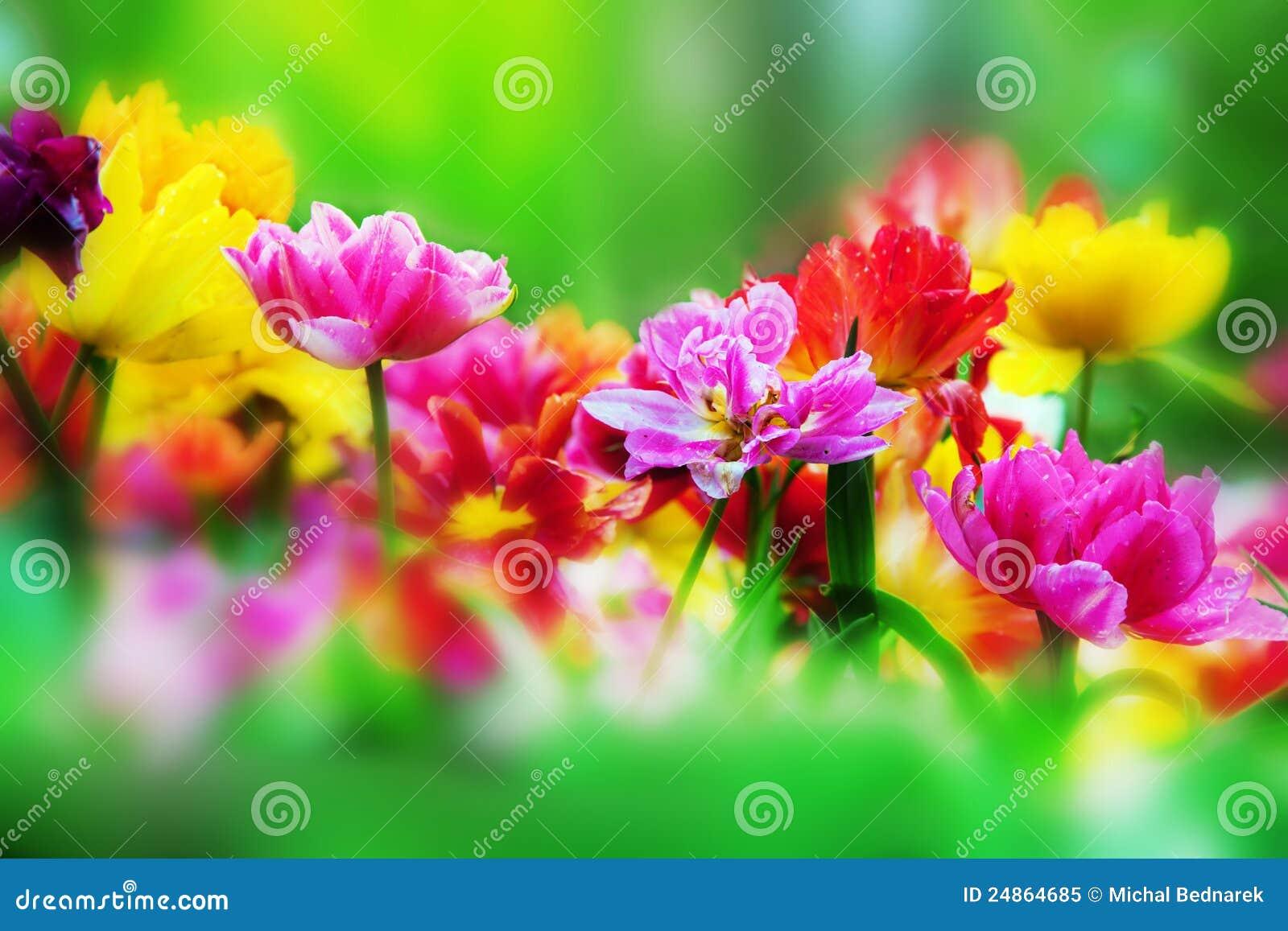 Excepcional Flores Coloridas No Jardim Da Mola Imagem de Stock - Imagem de  NV66