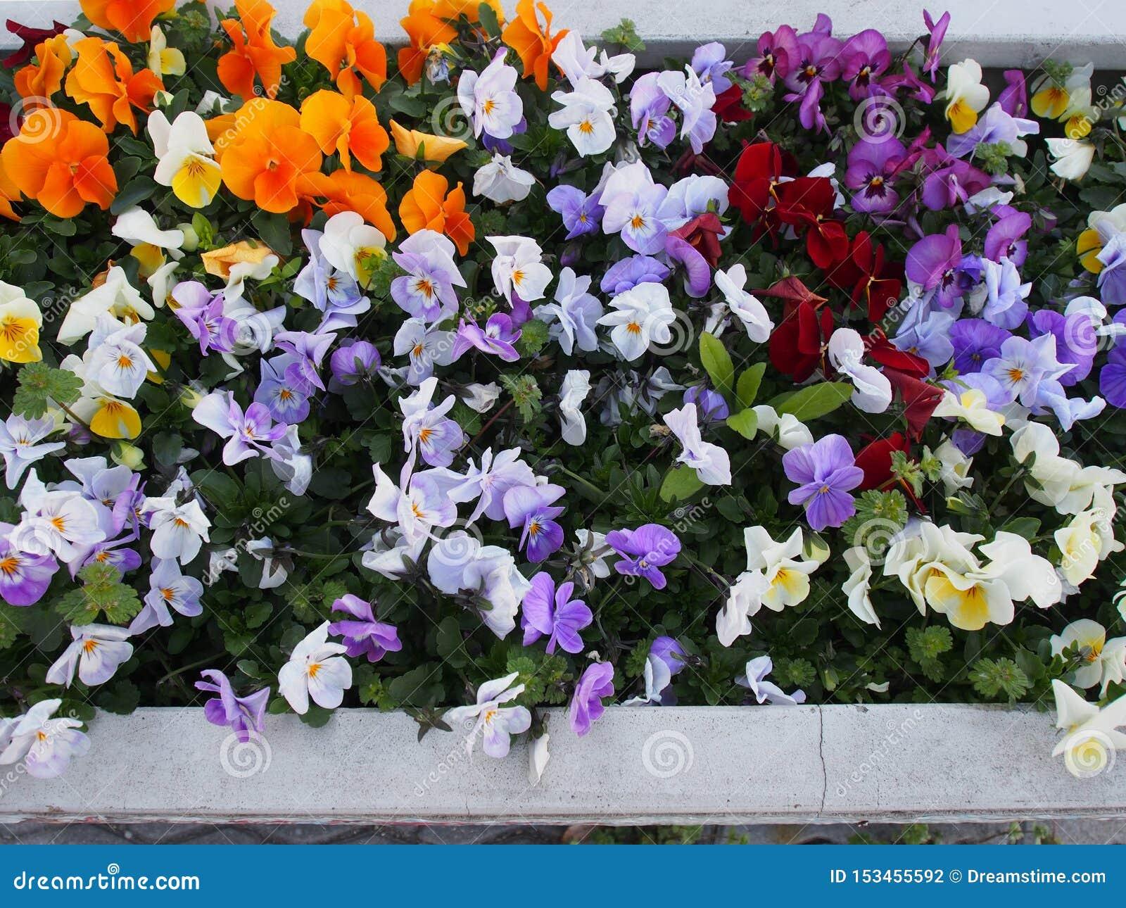 Flores coloridas Osaka Japan Travel de la calle