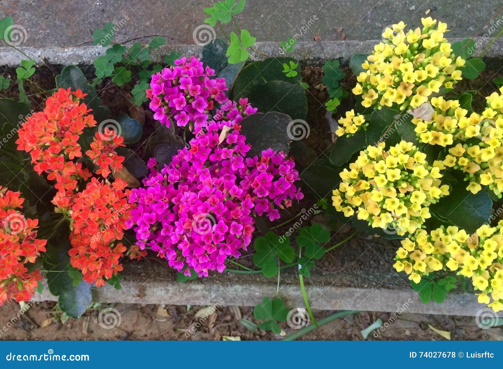 Flores Coloridas Pequenas Foto De Stock. Imagem De Cimento
