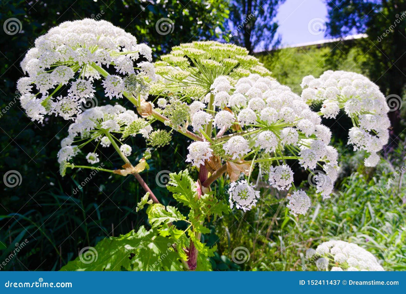 Flores coloridas que florescem no verão