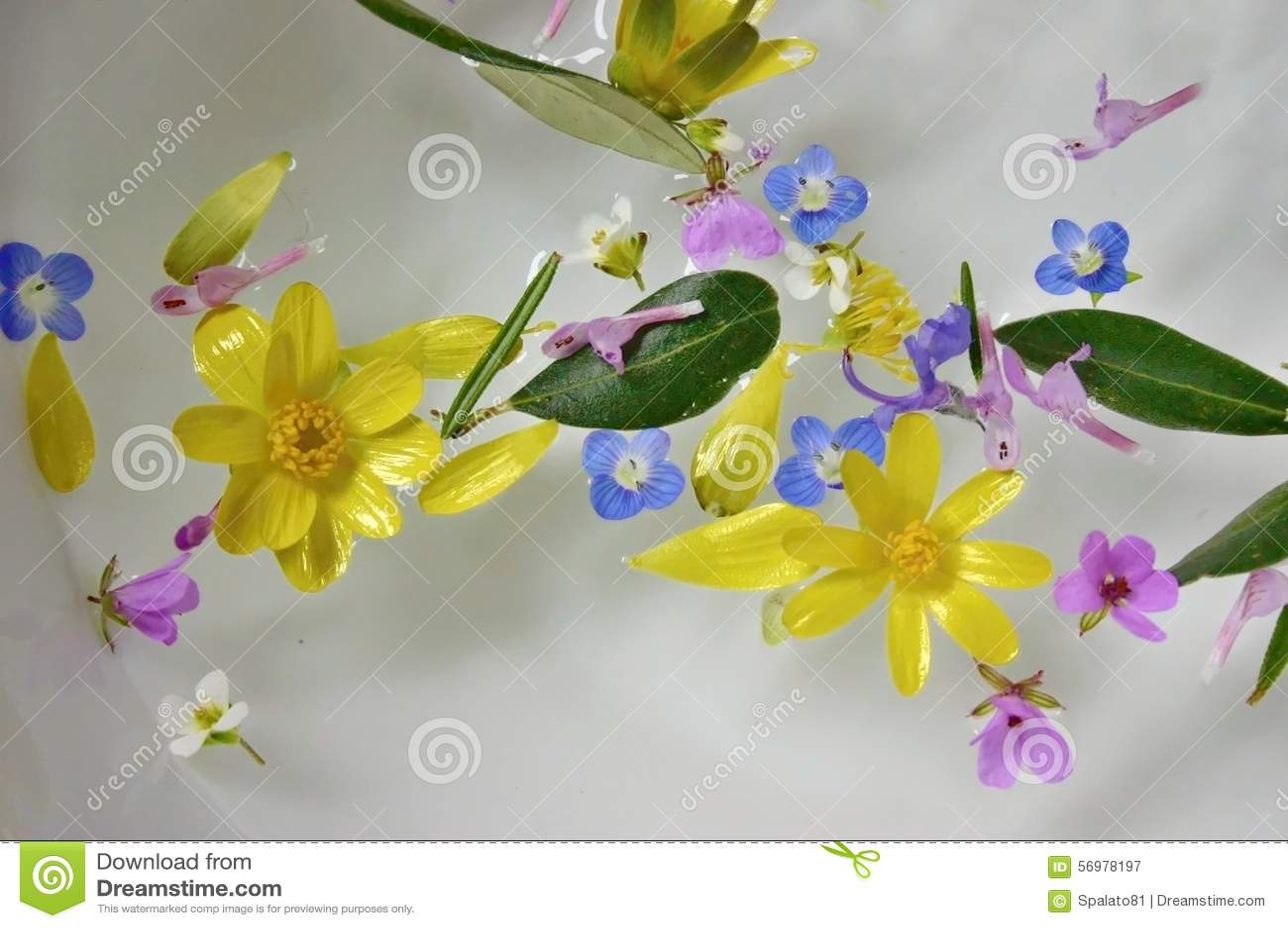 Flores coloridas que flutuam na superfície da água