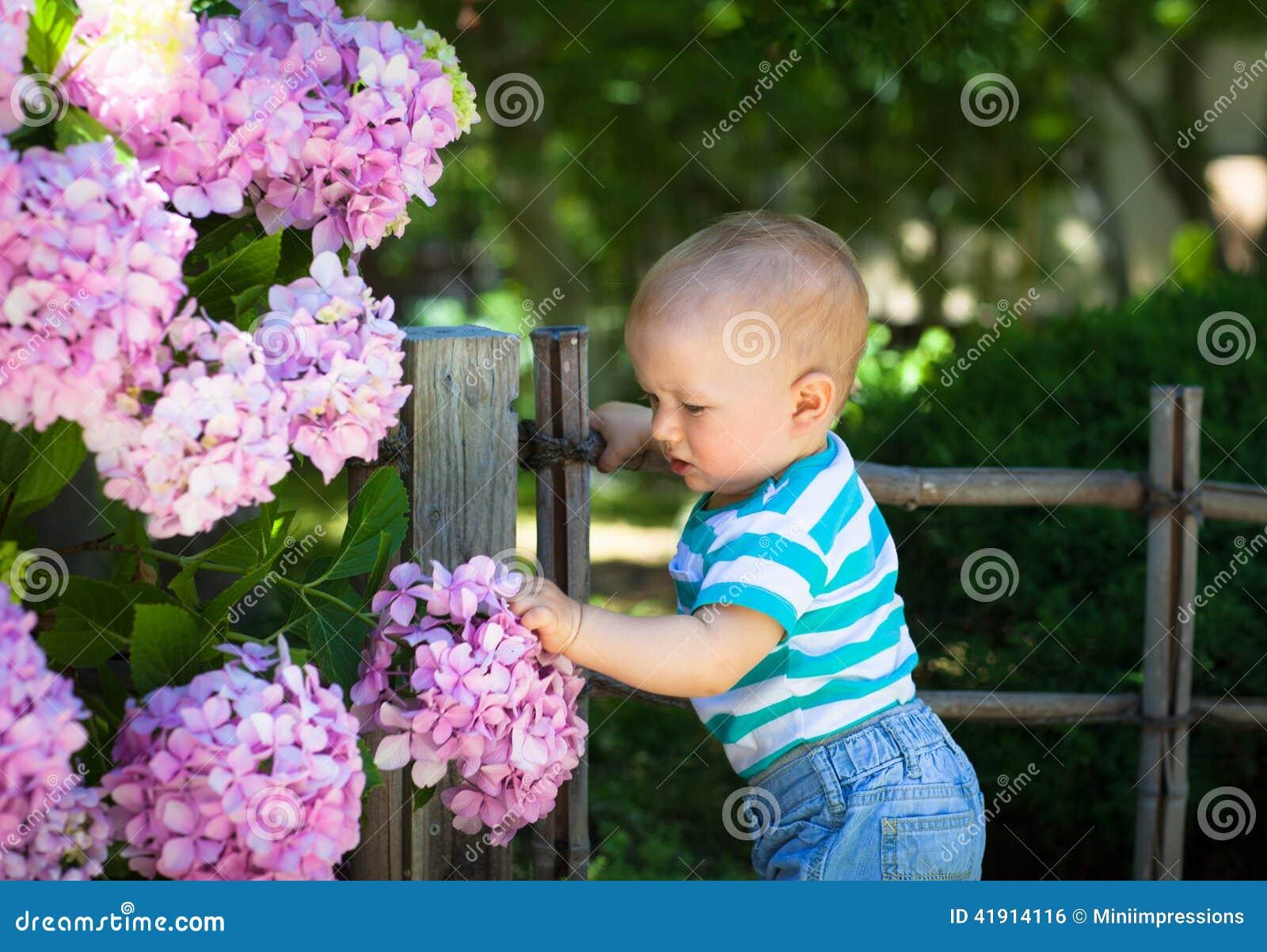 Flores conmovedoras de la hortensia del bebé lindo