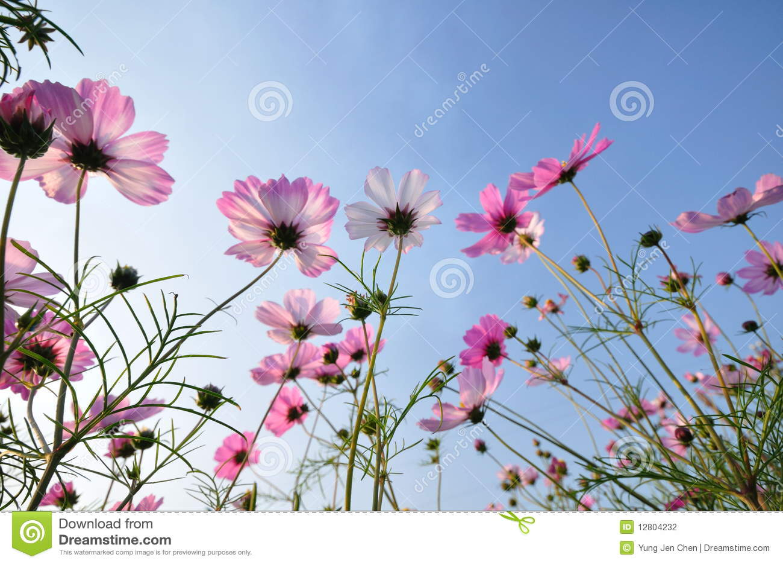 Flores cor-de-rosa