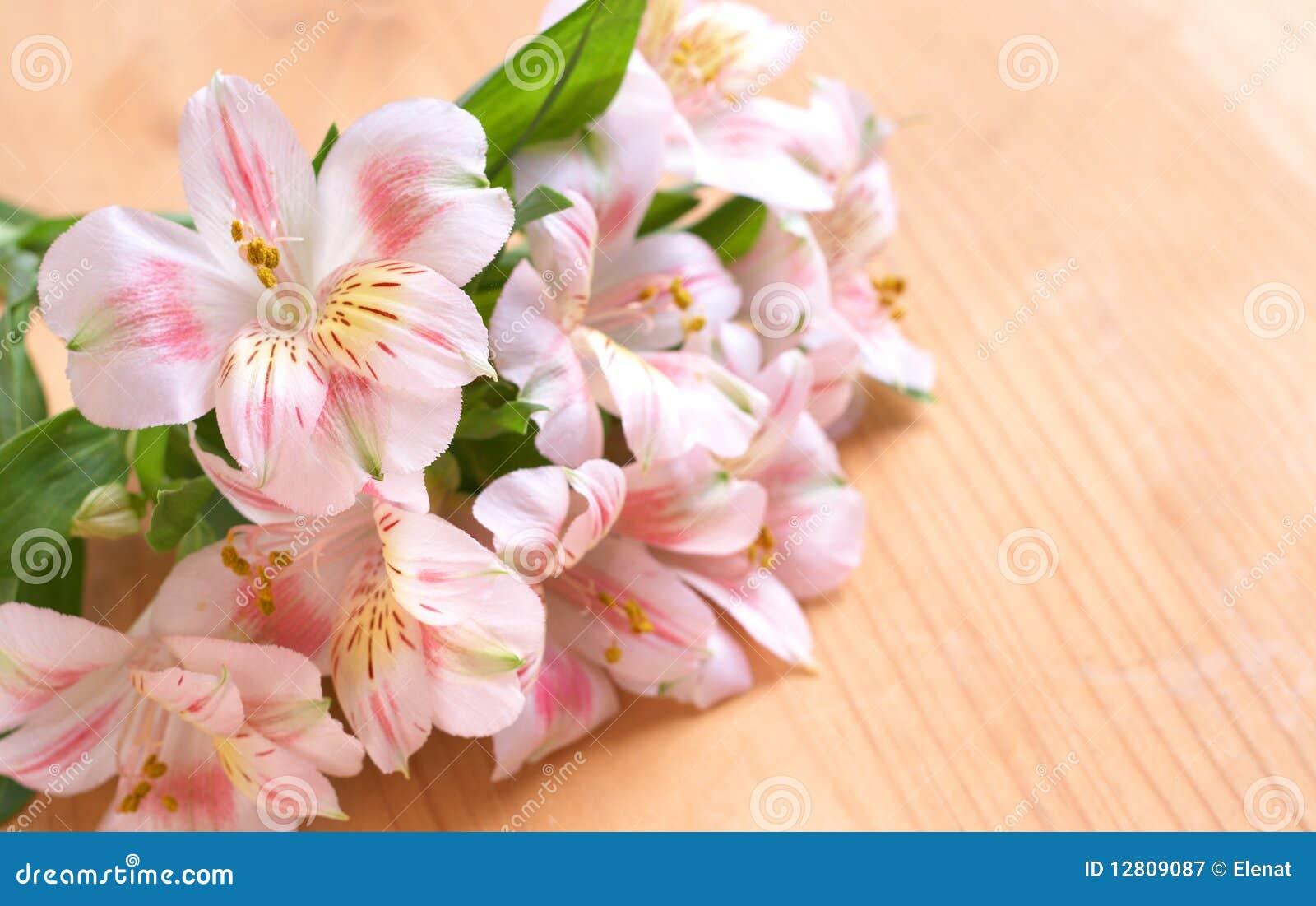 Flores cor-de-rosa bonitas com espaço da cópia