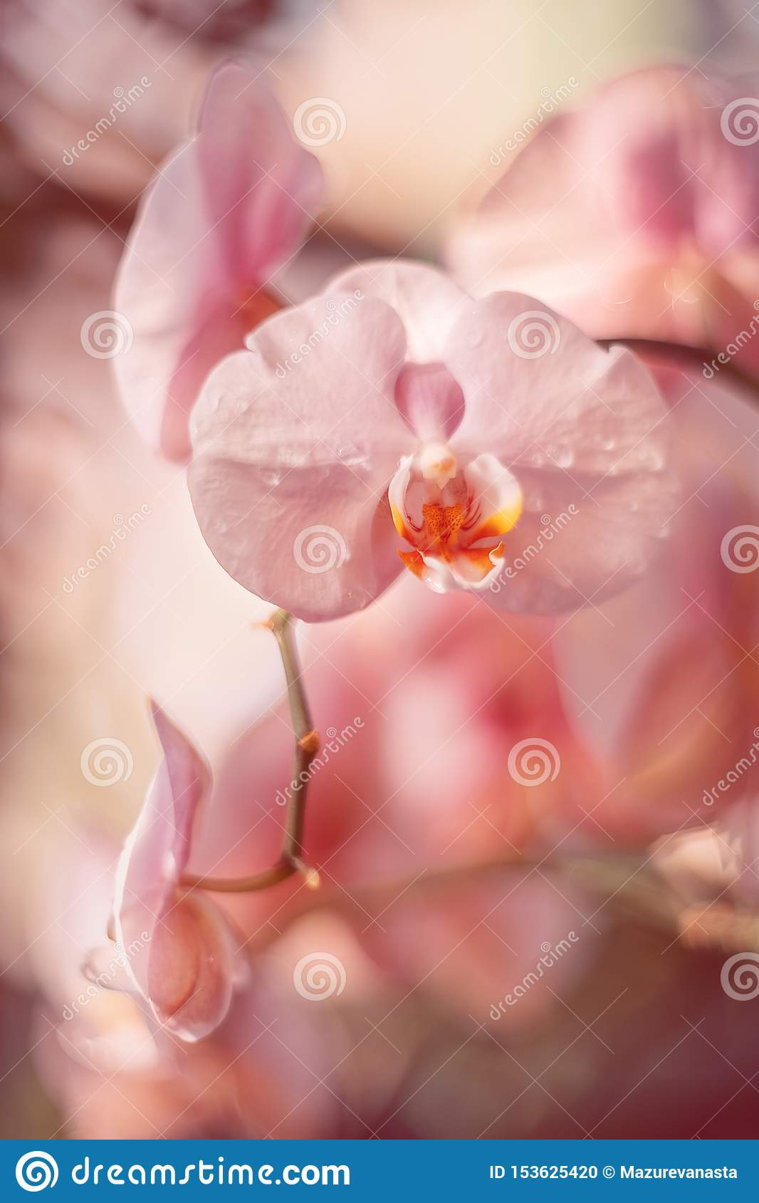 Flores cor-de-rosa delicadas Orqu?deas no jardim