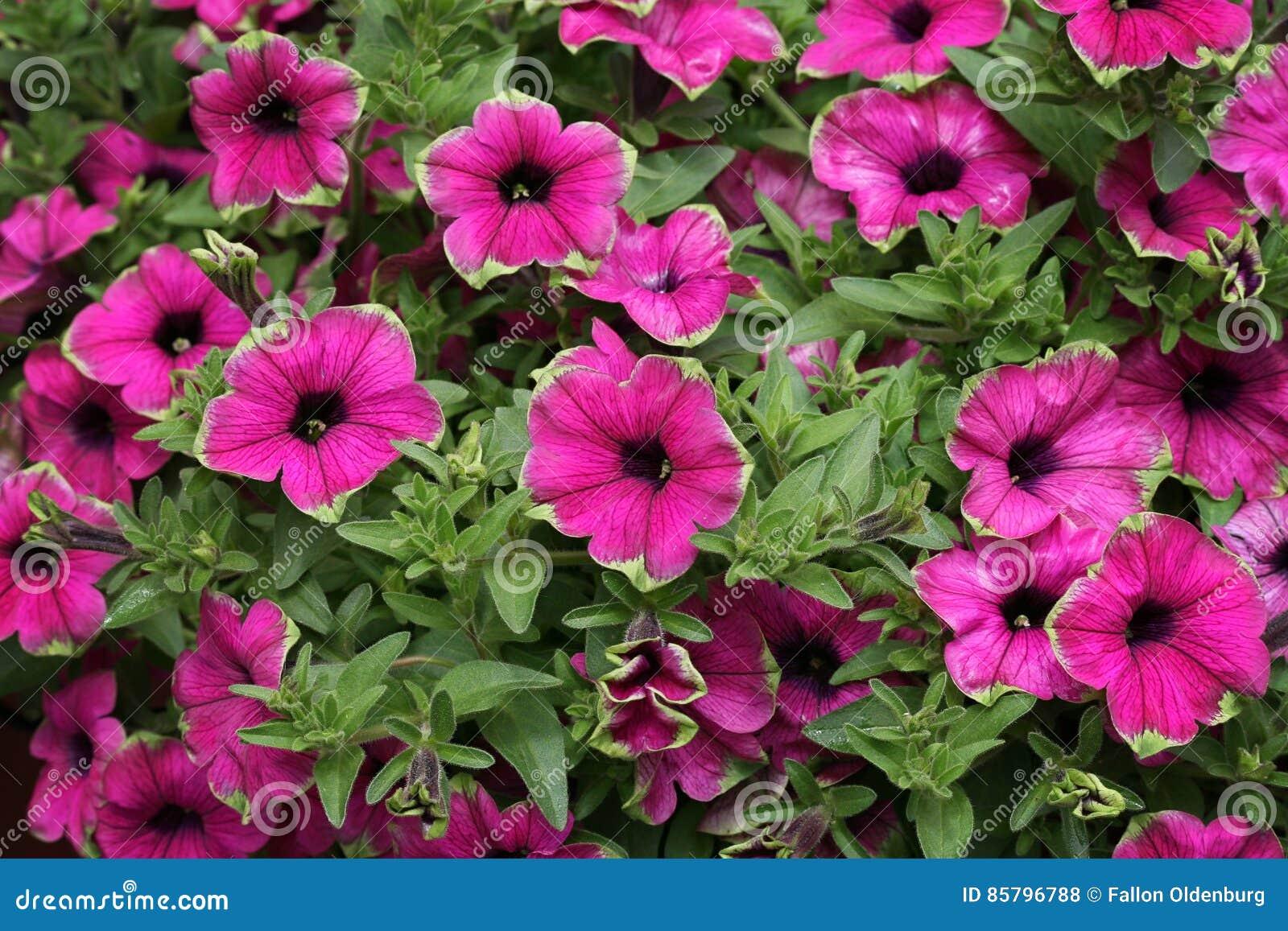 Flores cor-de-rosa e verdes