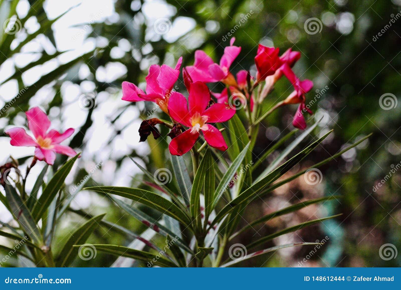 Flores cor-de-rosa escuras no vale