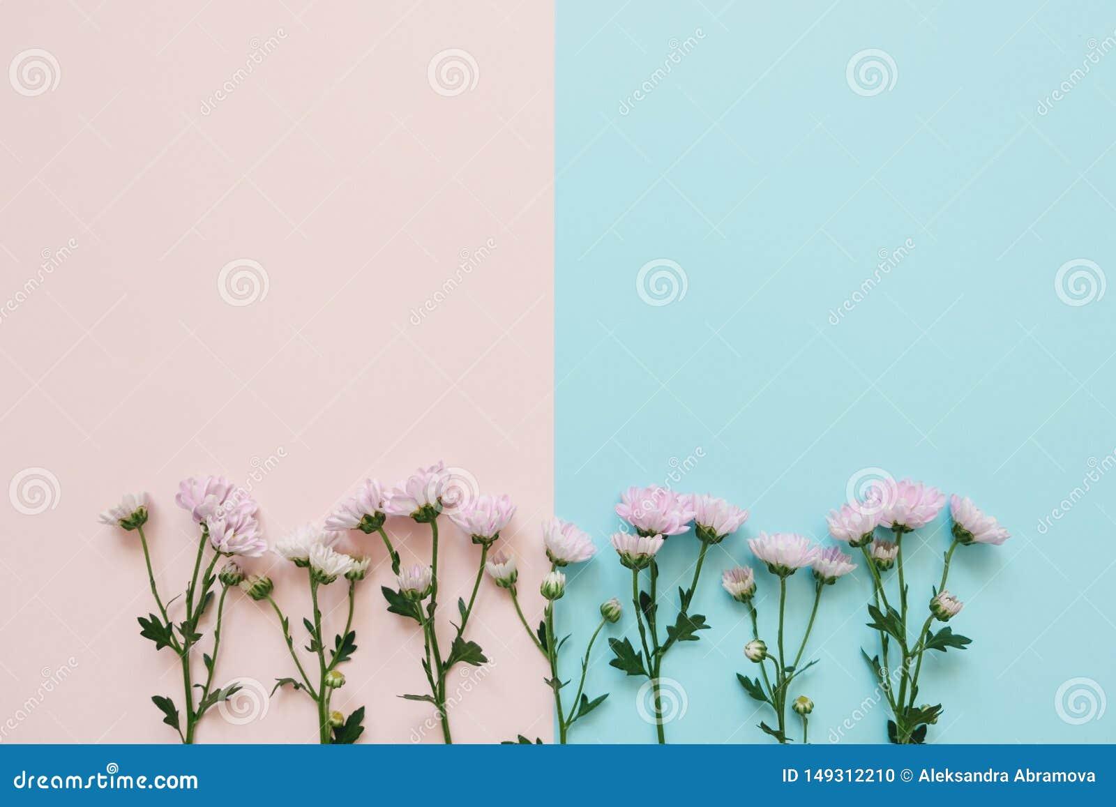 Flores cor-de-rosa no fundo cor-de-rosa-azul