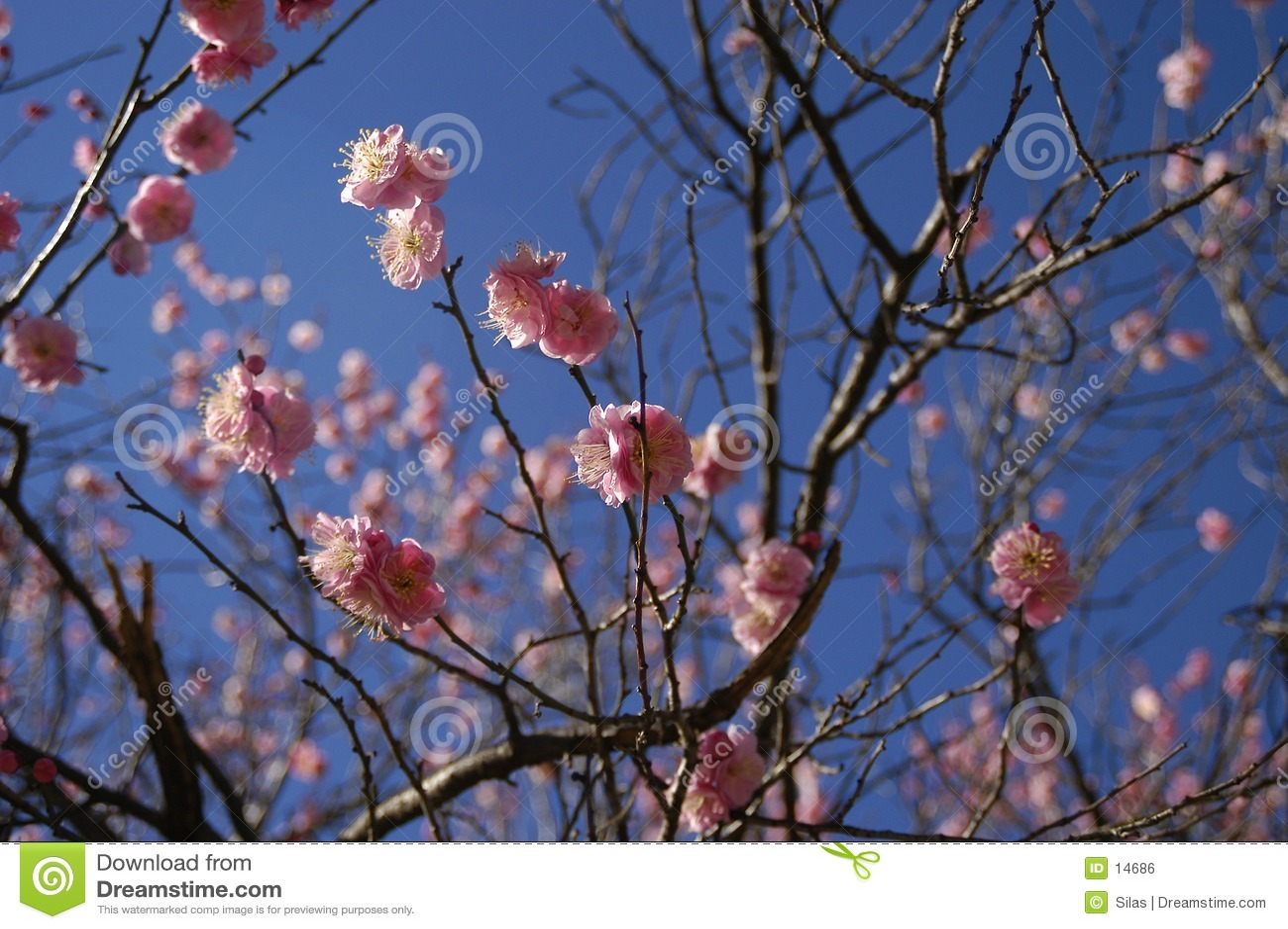 Flores da mola
