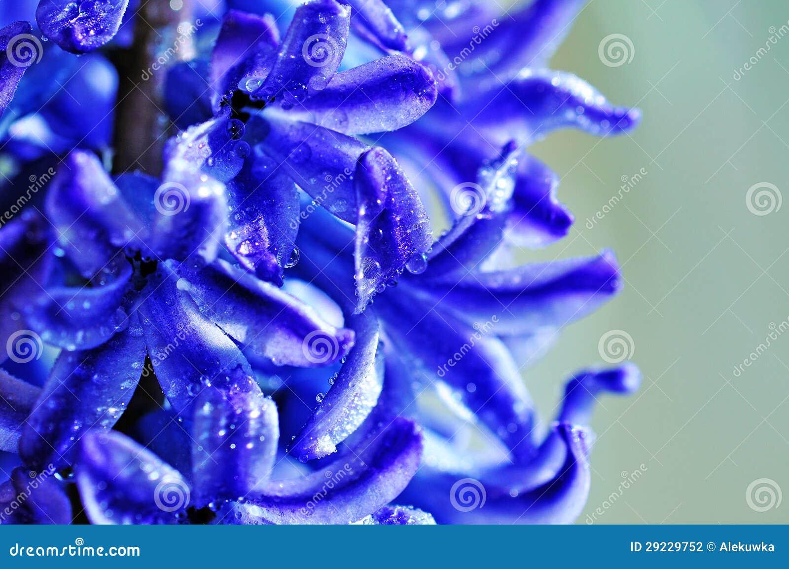 Download Flores da mola foto de stock. Imagem de easter, outdoor - 29229752
