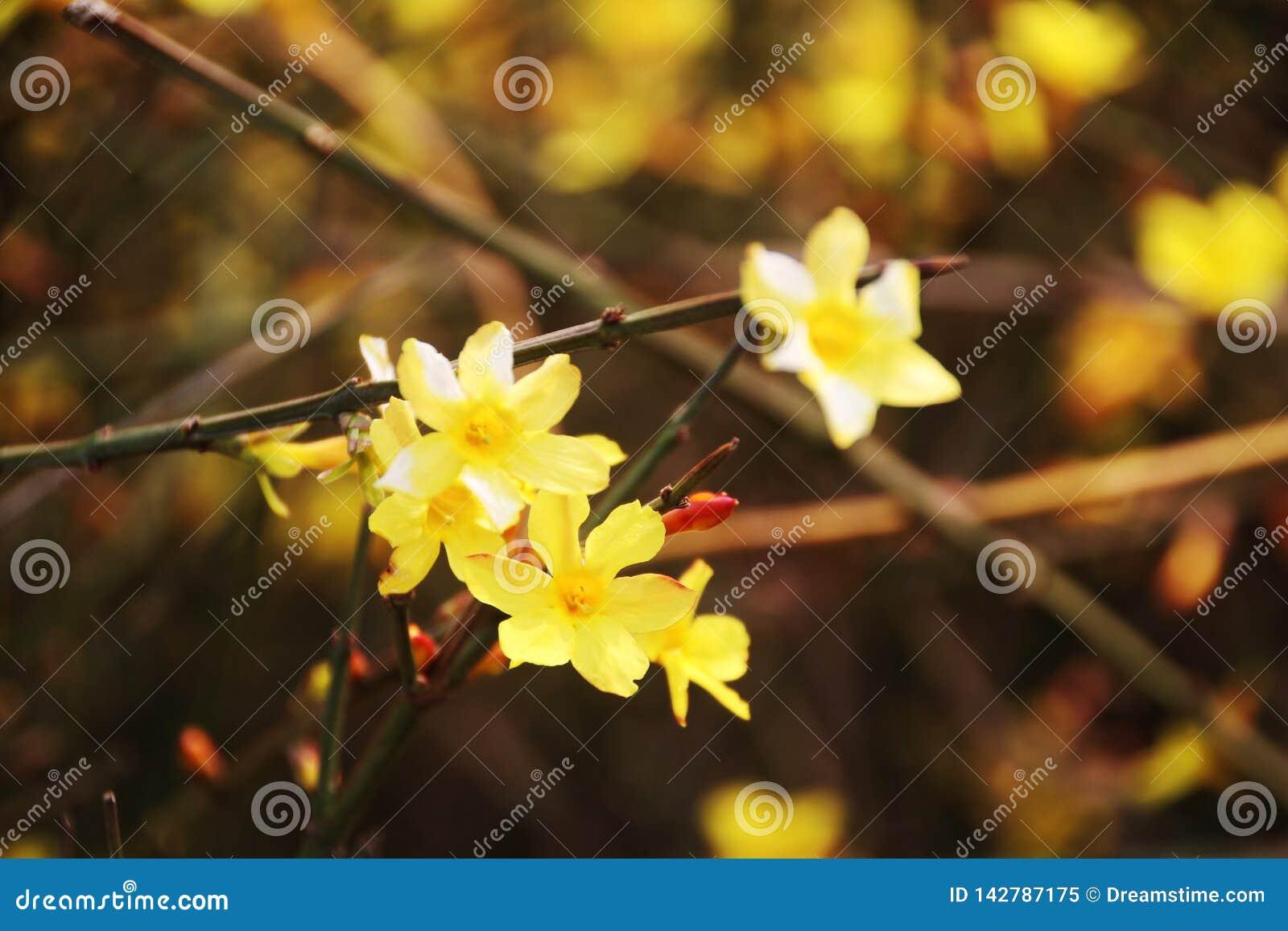 Flores da mola na luz do sol