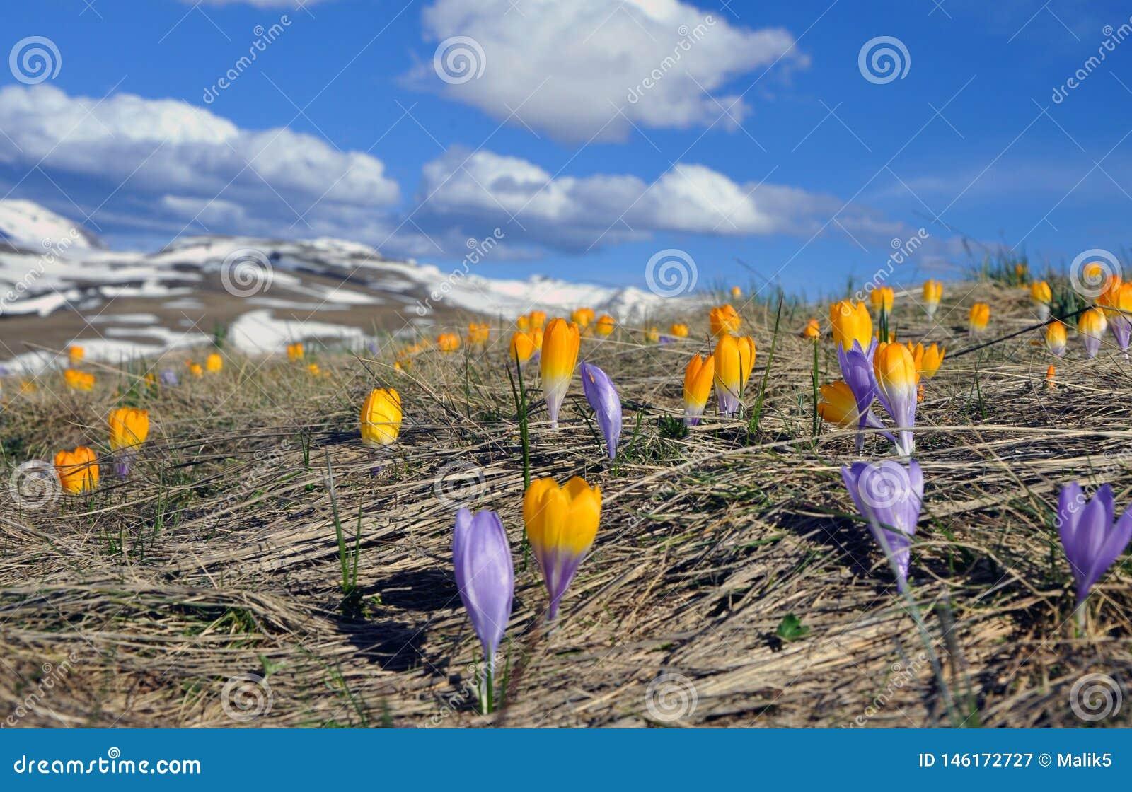 Flores da mola nas montanhas