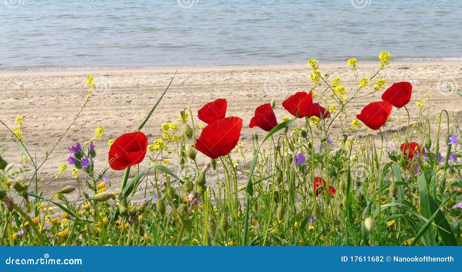 Flores da mola pela praia ensolarada