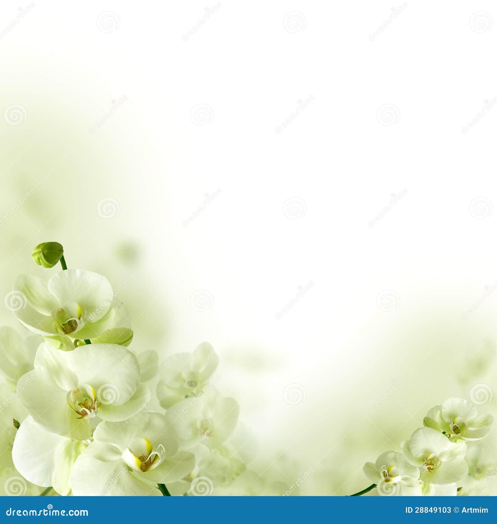 Flores da orquídea e hortaliças, fundo floral