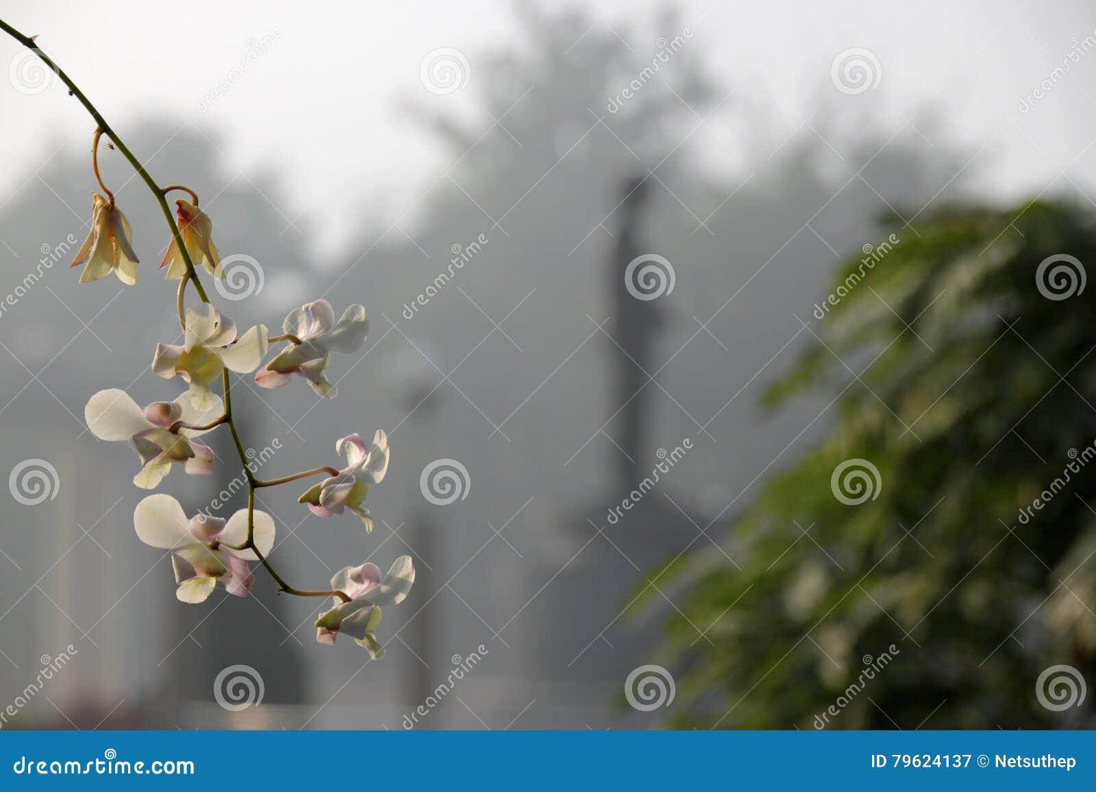Flores das orquídeas