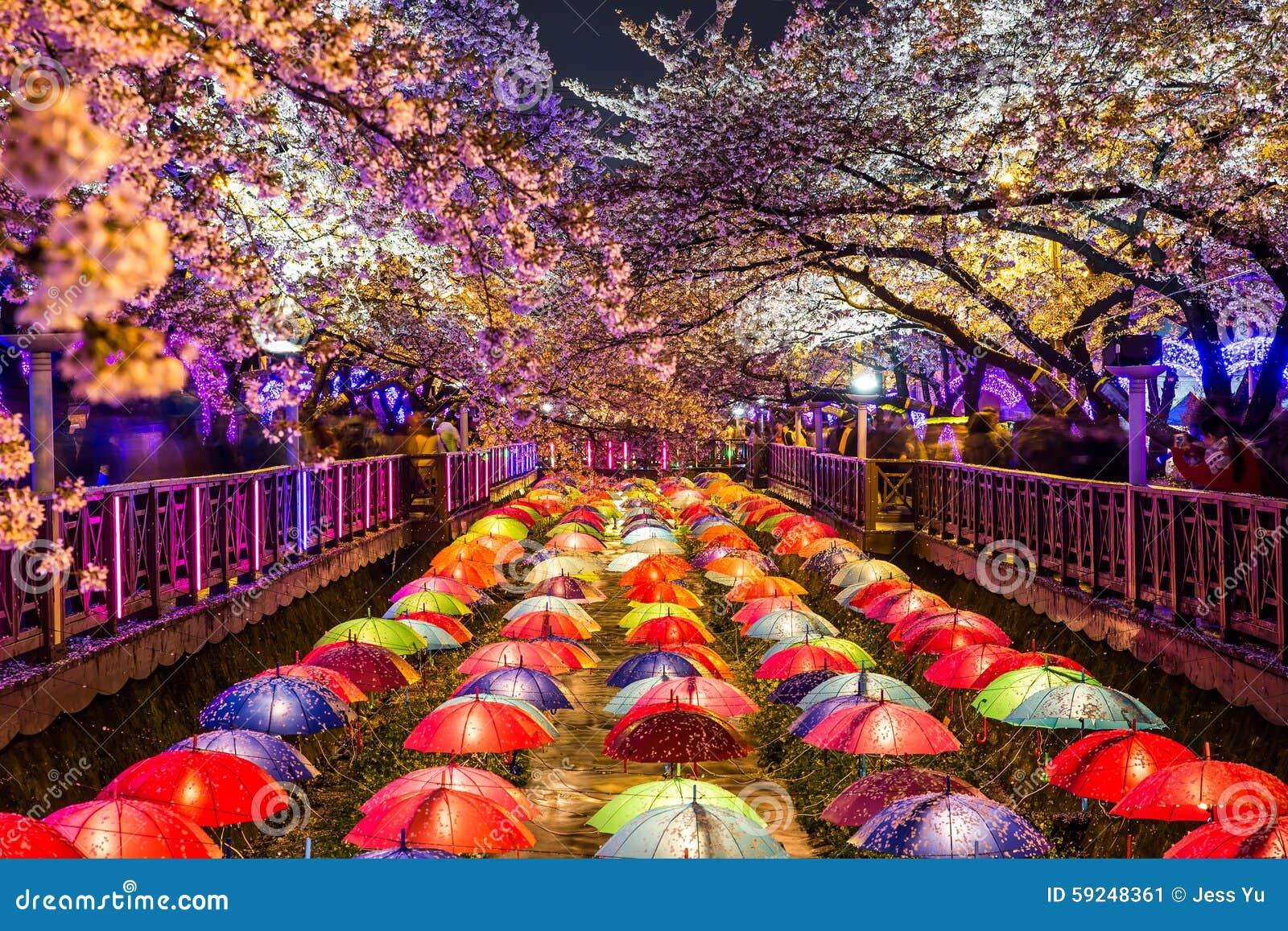 Flores de cerejeira na noite em Busan, Coreia do Sul