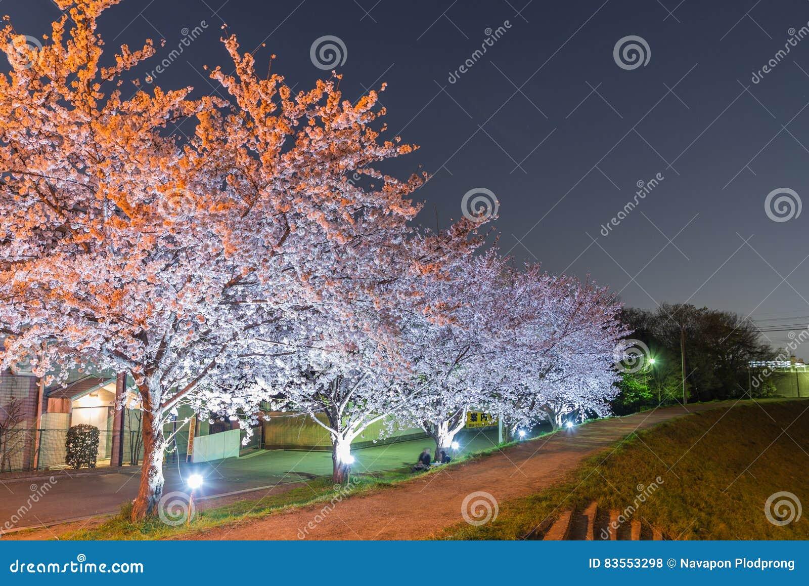Flores de cerezo en la noche