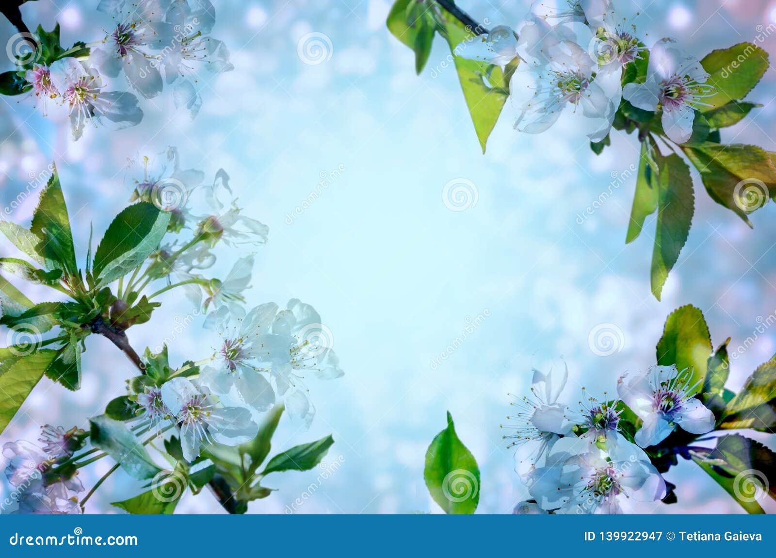 Flores de cerezo sobre fondo azul