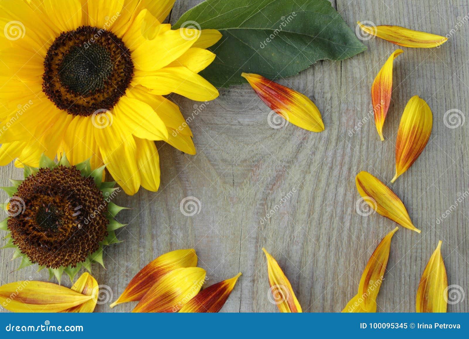 Flores de girasoles en fondo de madera