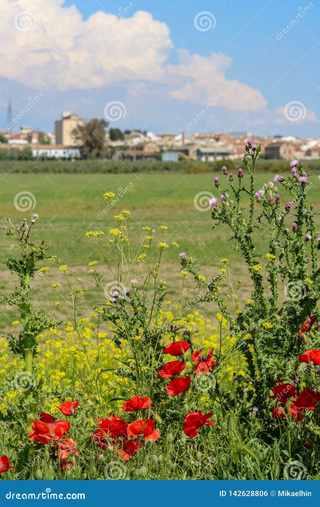 Flores de la amapola delante de edificios industriales