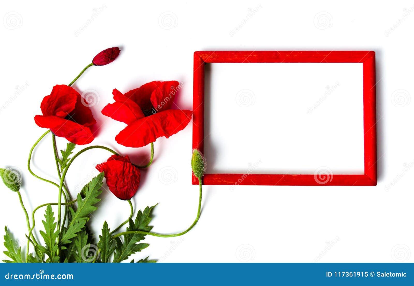 Flores De La Amapola Y Marco De Madera Rojo En Blanco Imagen de ...