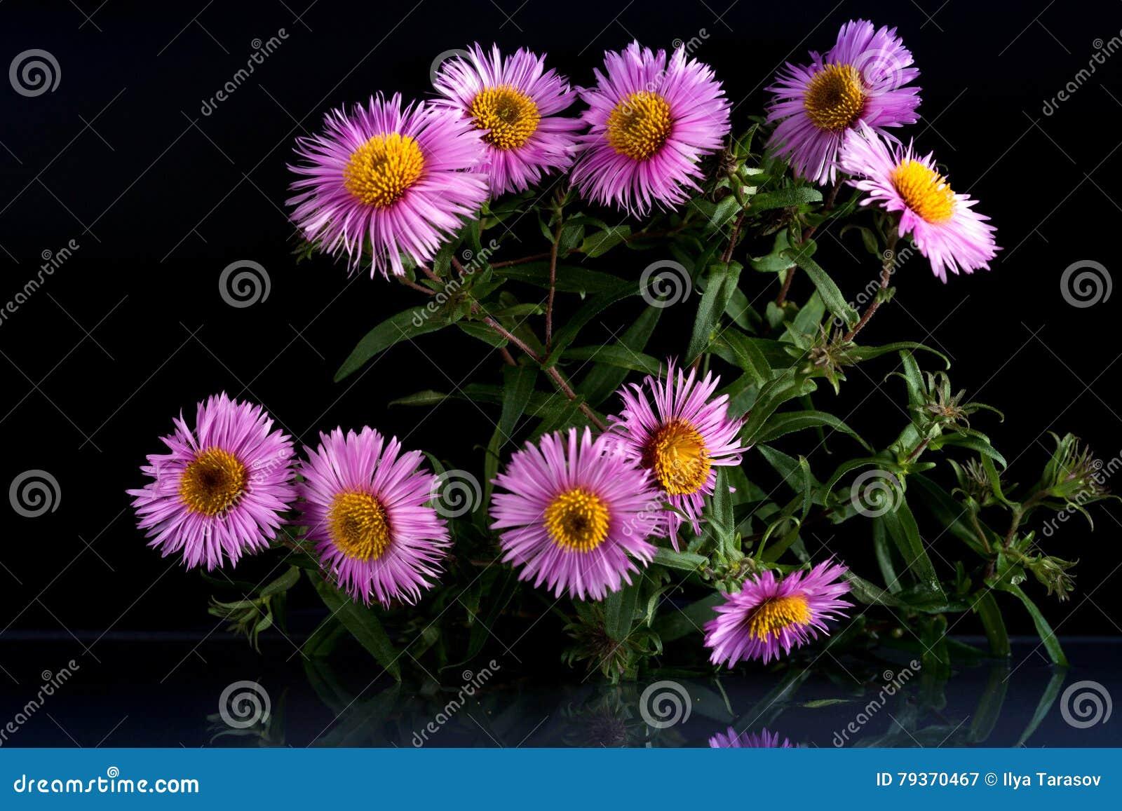Flores de la belleza fantástica de la fauna