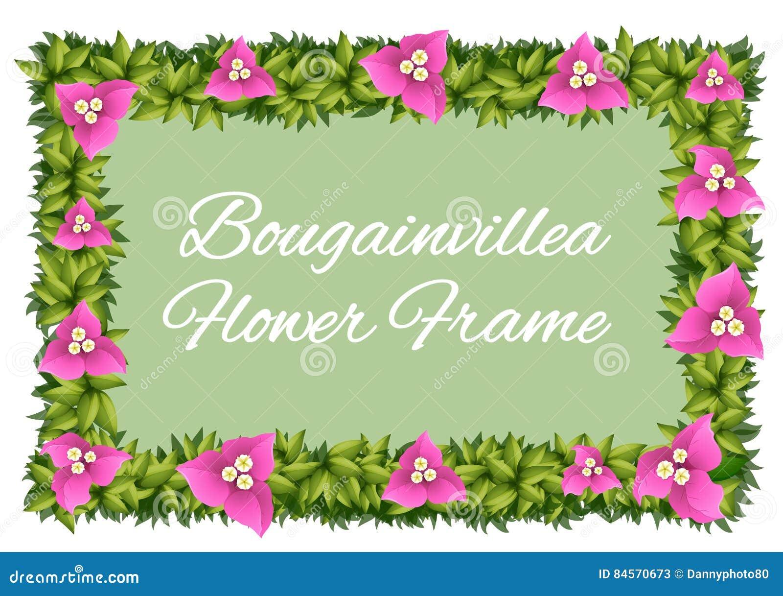 Flores De La Buganvilla Como Diseño Del Marco Ilustración del Vector ...