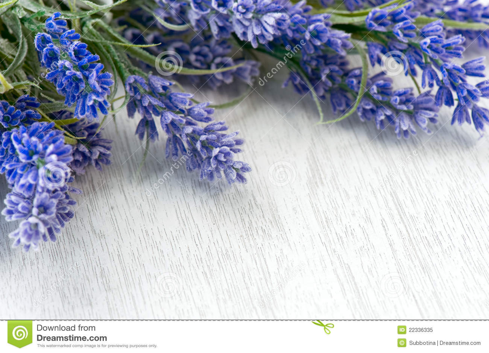 Flores de la lavanda