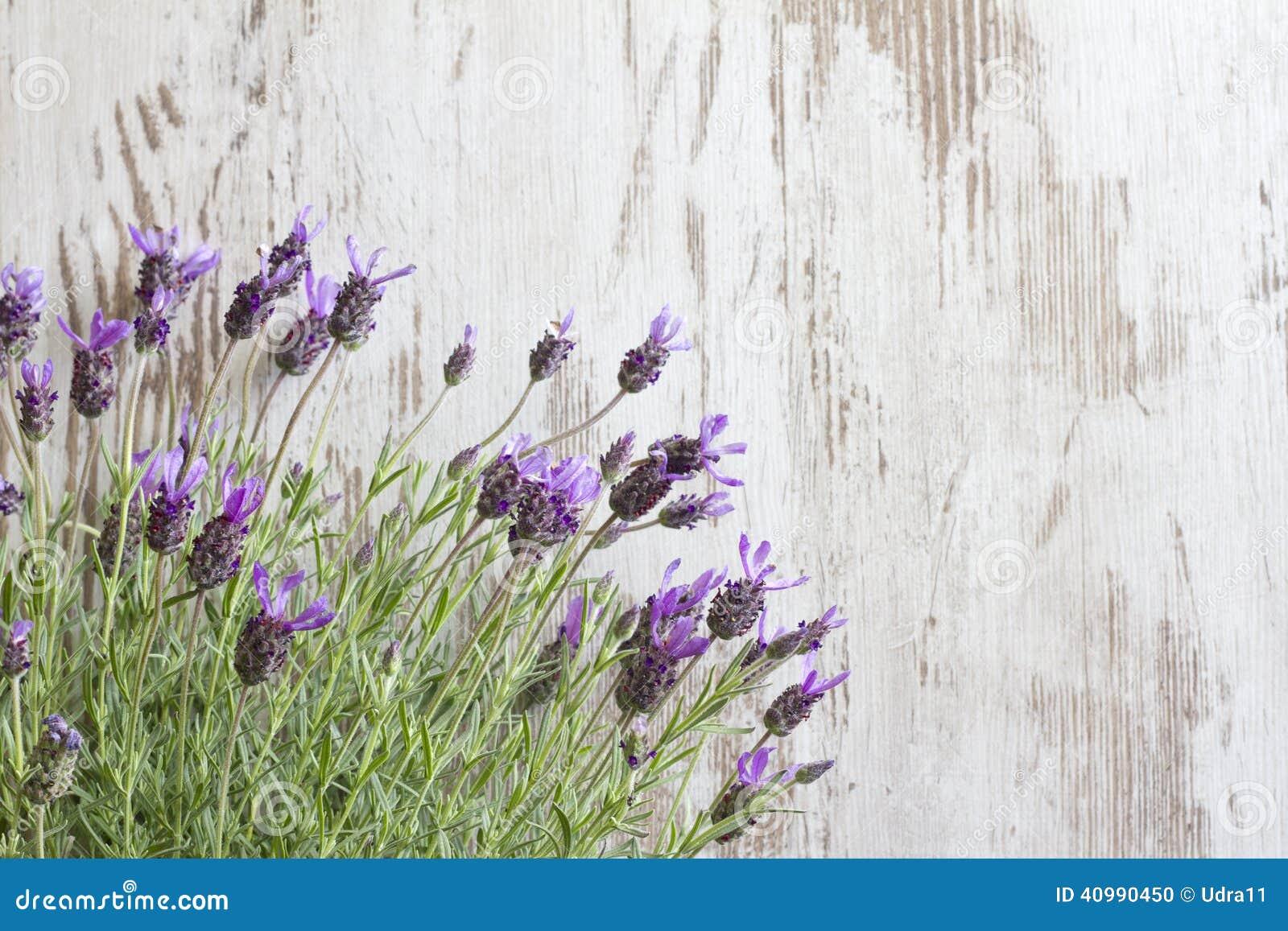 Flores de la lavanda en fondo de los tableros de madera for Fotos de lavanda