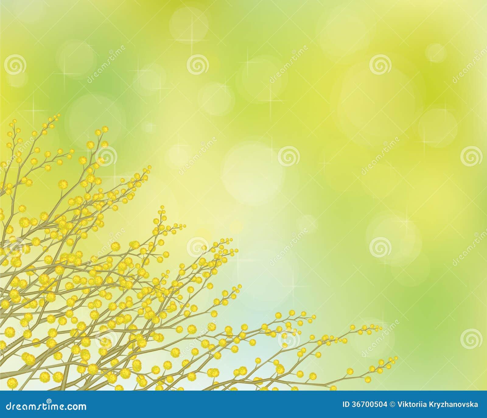 Flores de la mimosa del vector en fondo de la primavera.
