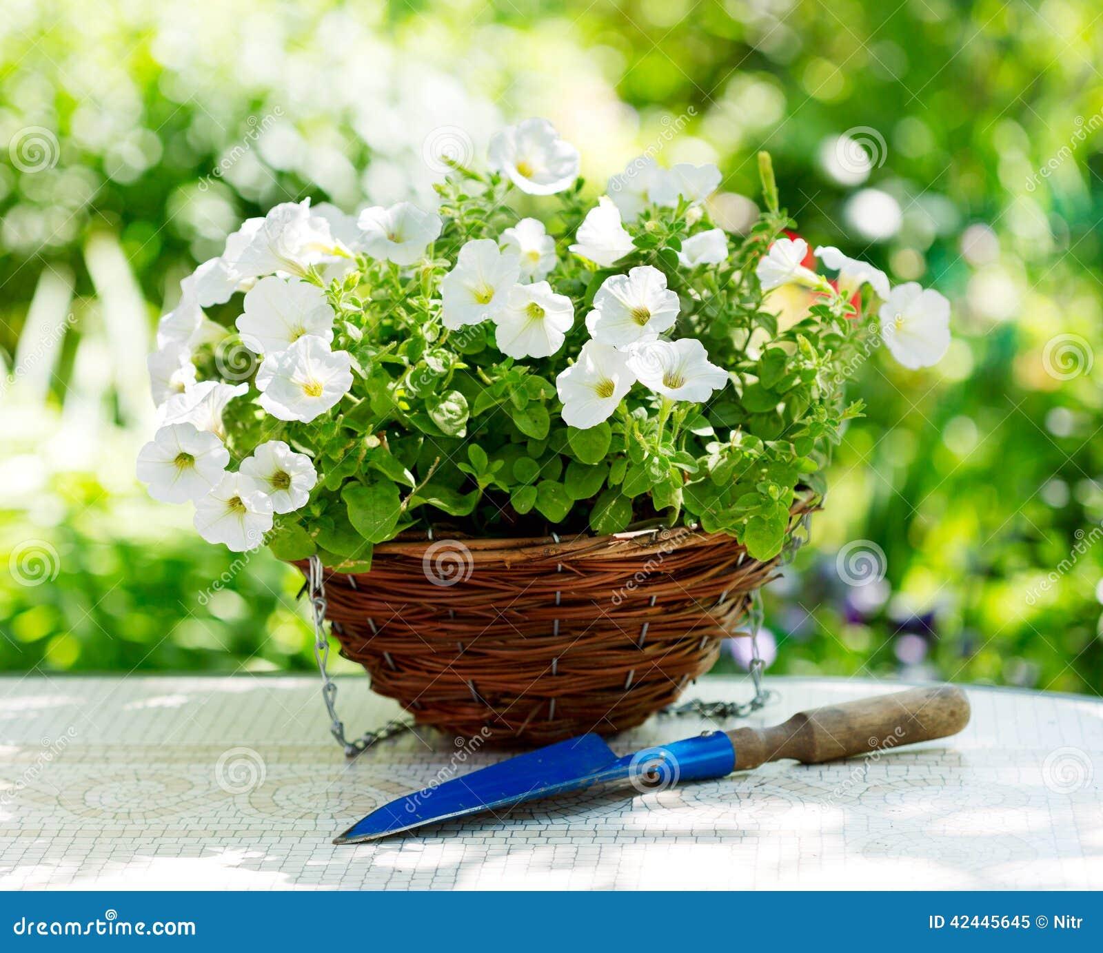 Flores de la petunia