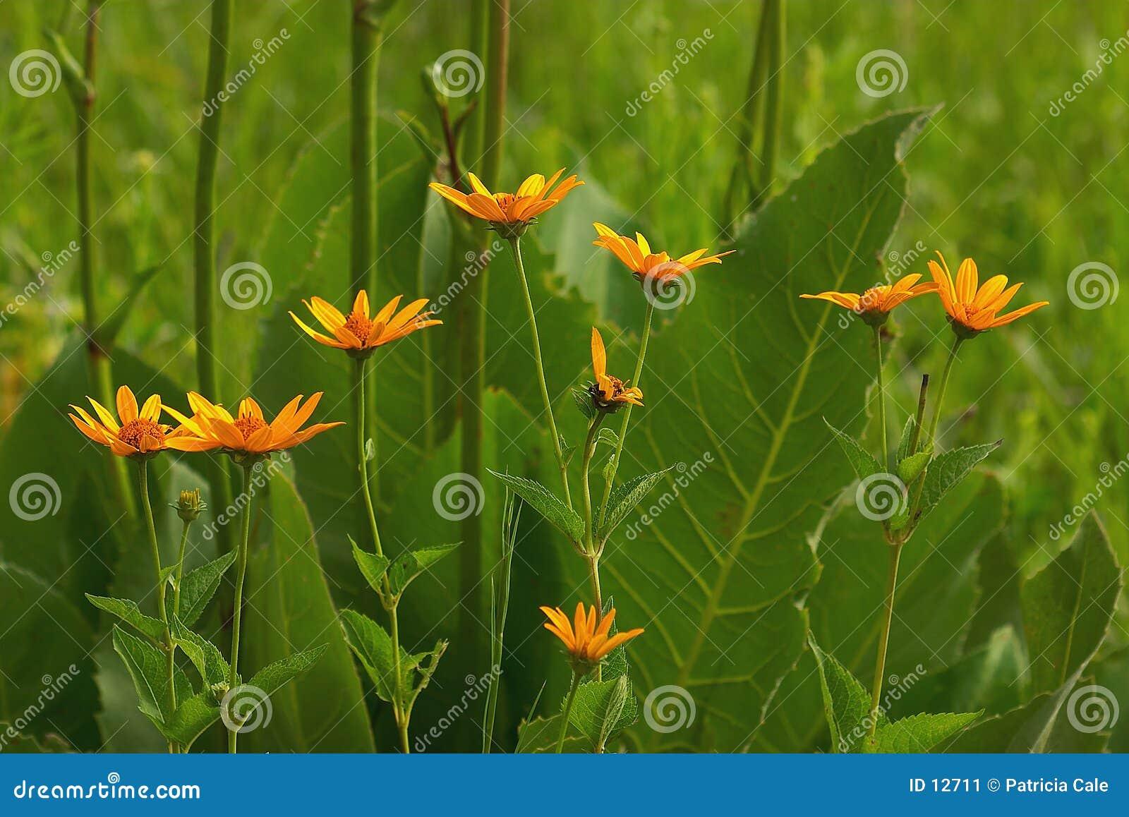 Flores de la pradera
