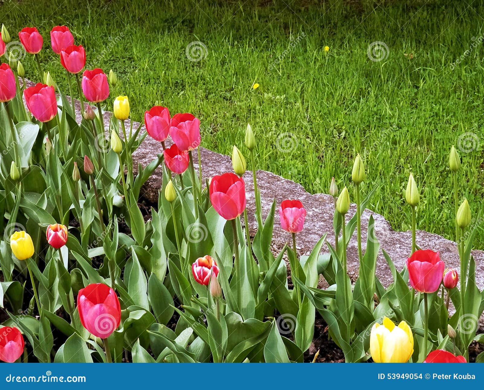 Flores de la primavera de los tulipanes en jardines y for Jardines en primavera fotos