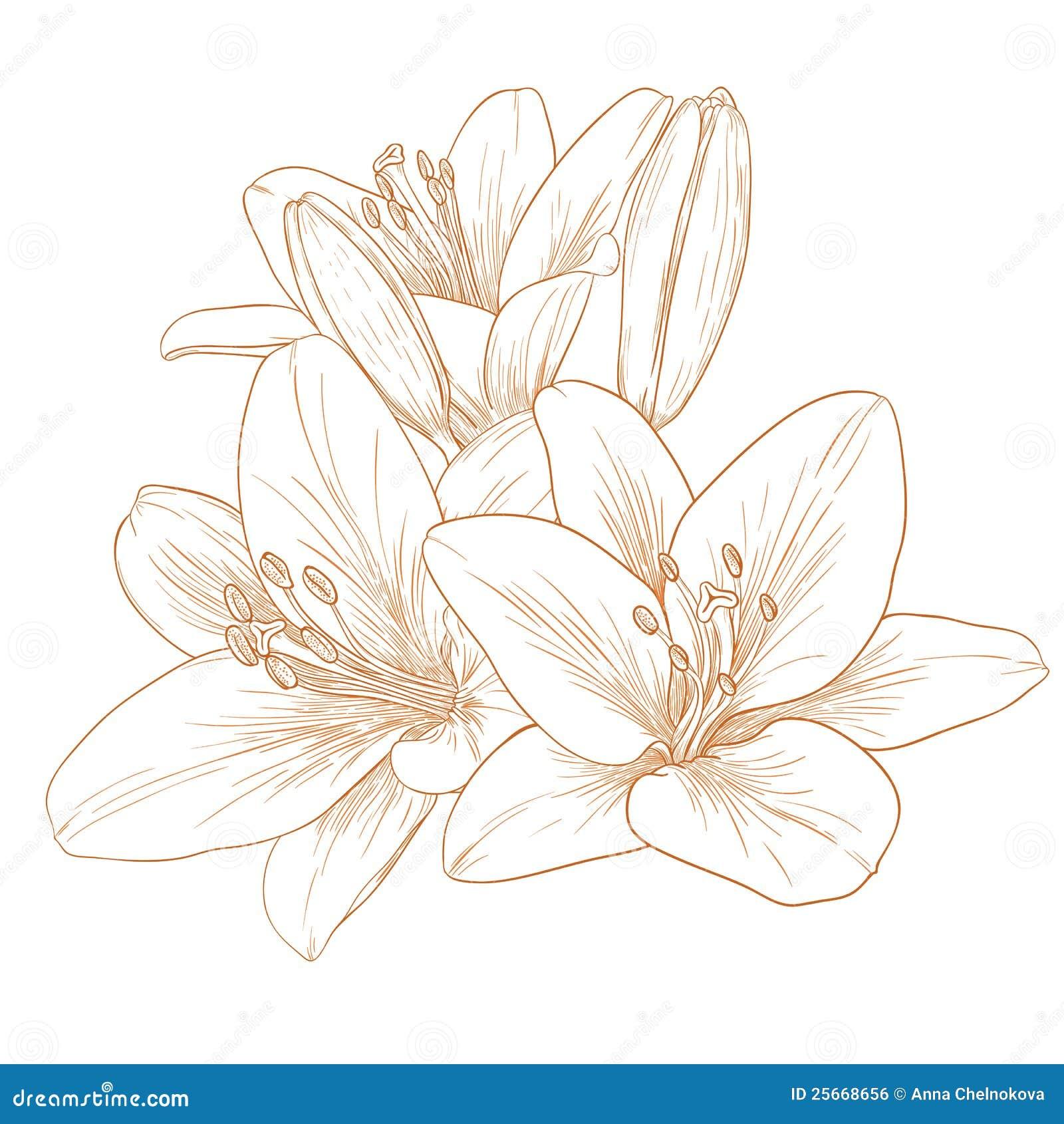 Flores de los lirios del vector.
