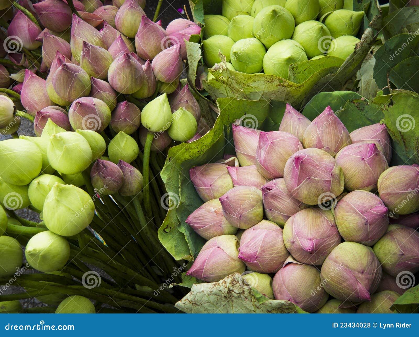 Flores De Loto Foto De Archivo Imagen De Loto Budista 23434028