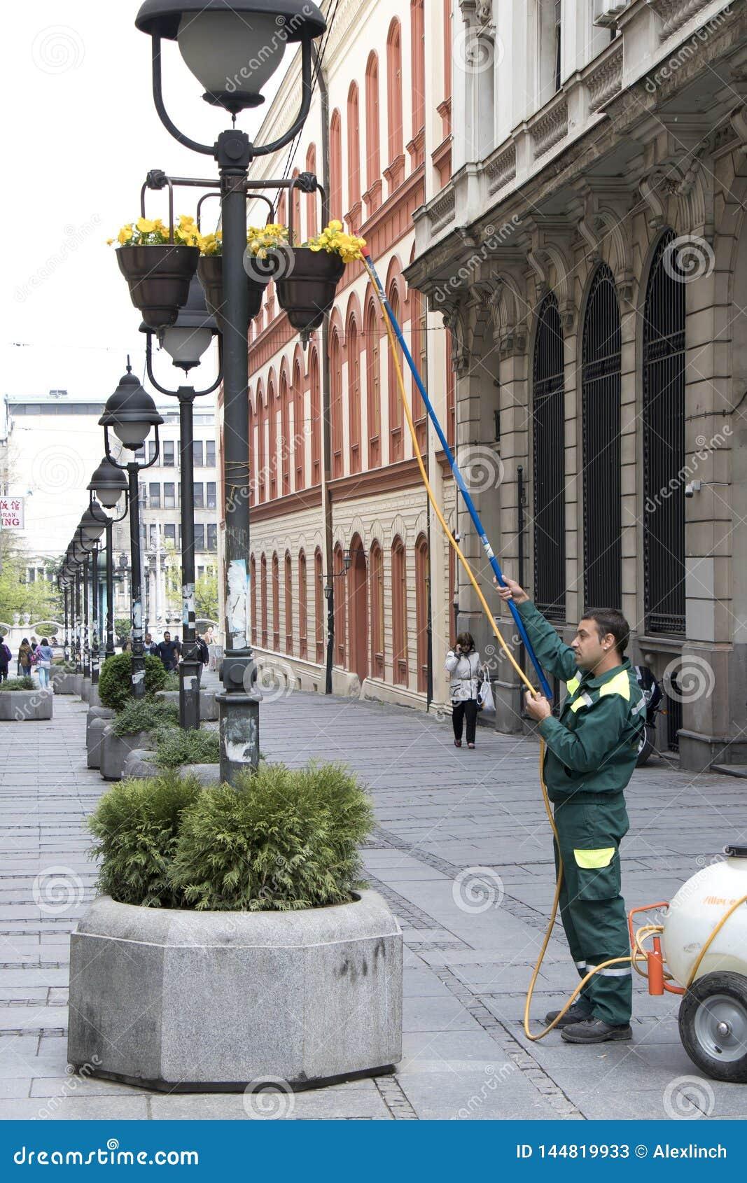 Flores de riego del servicio del verdor de la ciudad en cesta en polos ligeros
