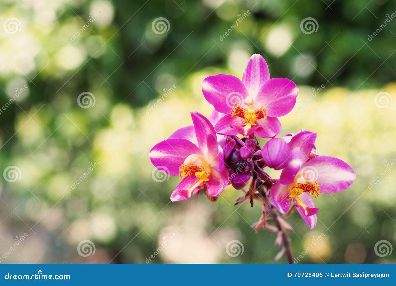 Flores de tierra de la orquídea