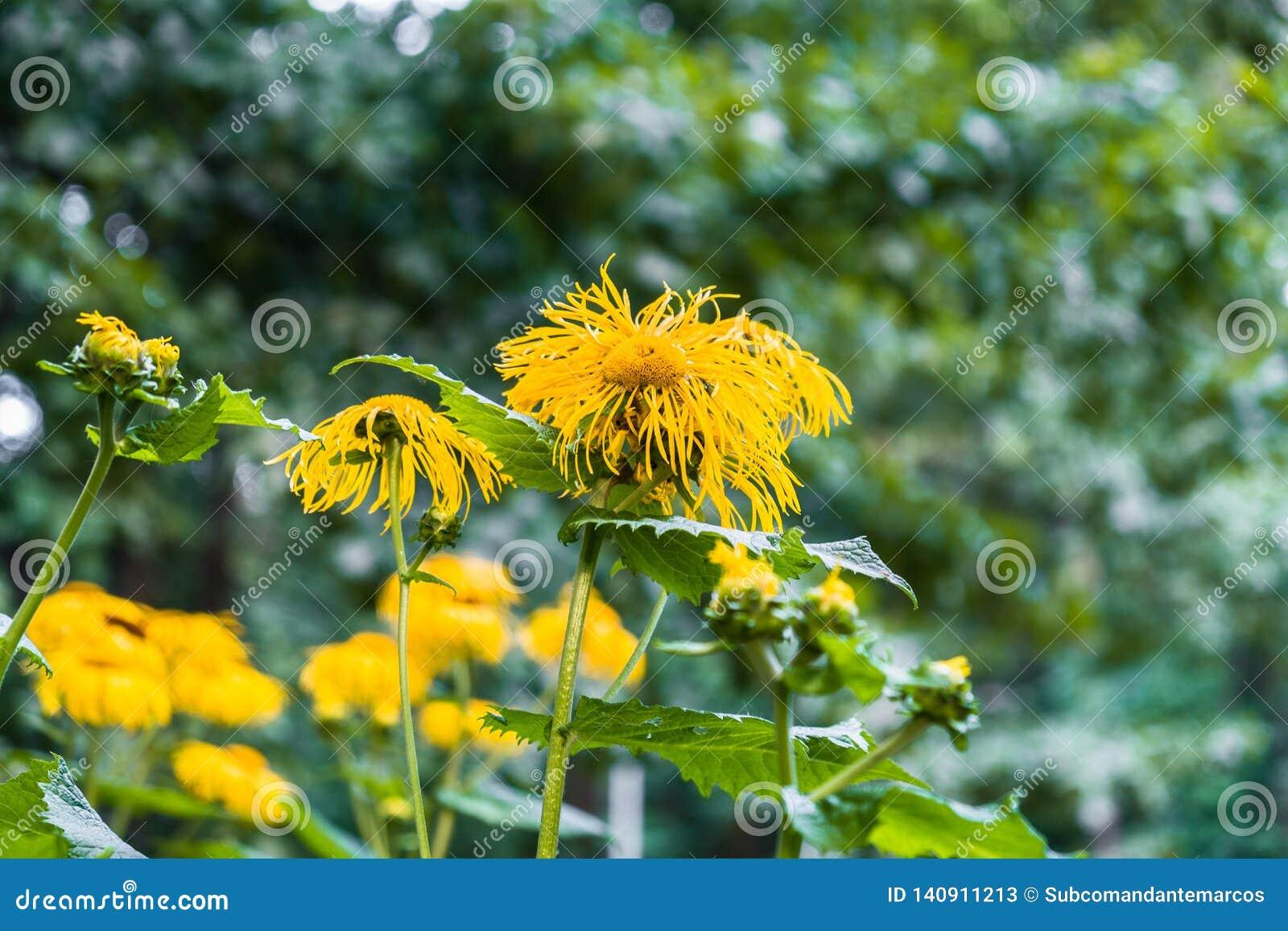 Flores decorativas amarillas preciosas en fondo verde borroso