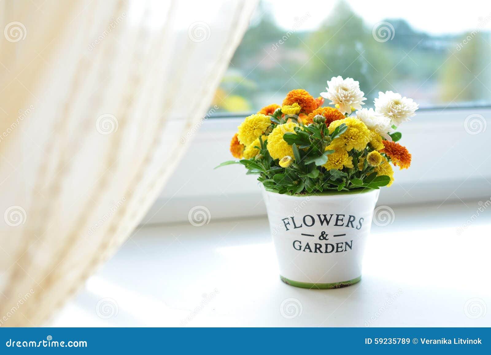 Download Flores Del Crisantemo En Un Pote De Cerámica Imagen de archivo - Imagen de decoración, fondos: 59235789