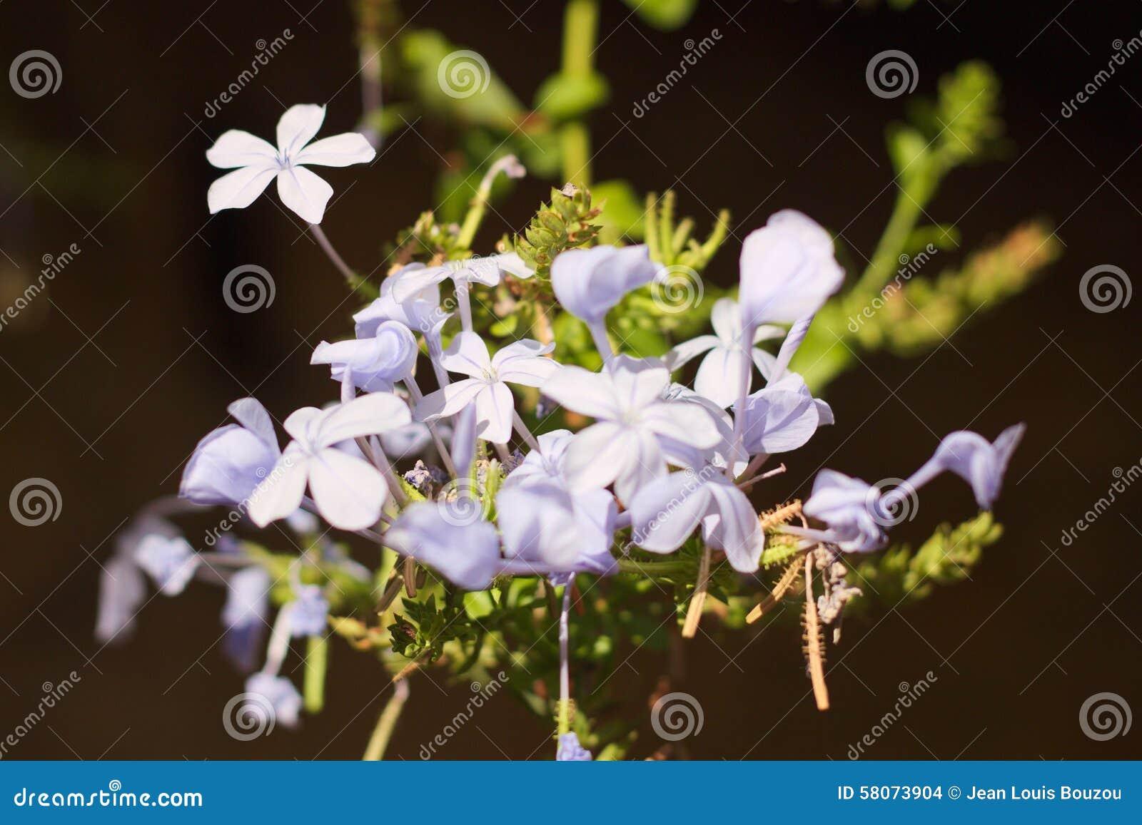 Flores del grafito