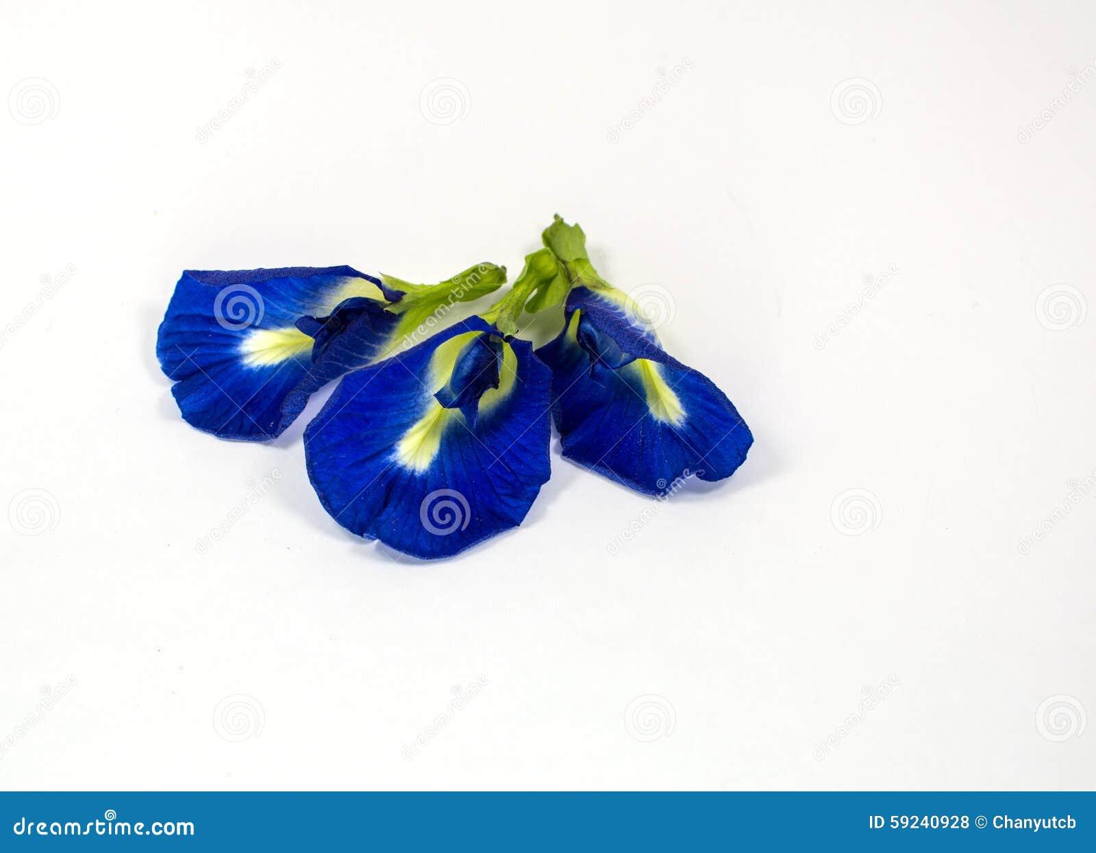 Flores del guisante azul en el fondo blanco
