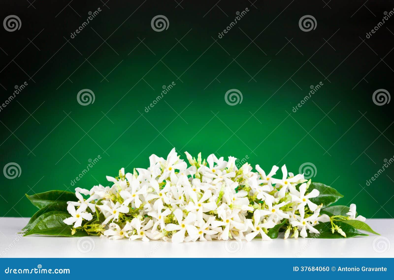 Flores del jazmín